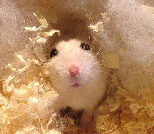 Un Petit Coucou De Nougat Le Hamster Et Chachou On Peut Vous Donner Des Conseils